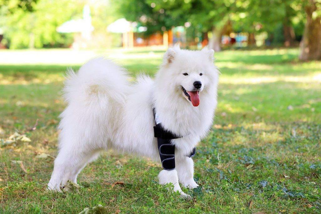 shoulder braces for dogs 1