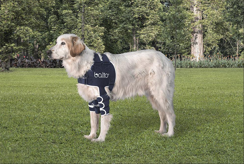 shoulder braces for dogs 2